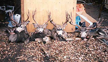 Alberta Mule Deer Hunting Outfitters