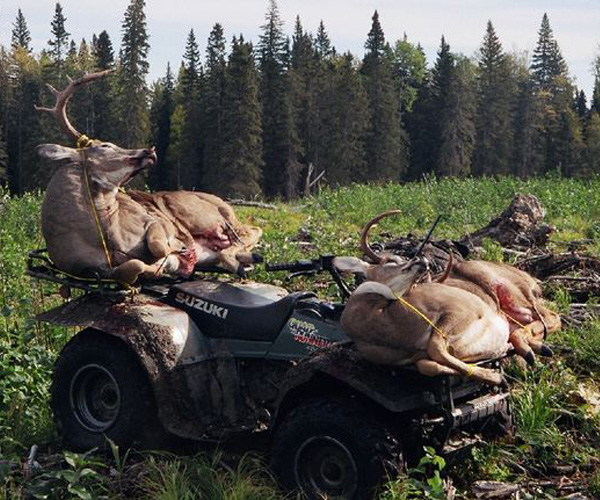 Alberta Whitetail Deer Hunting Outfitter