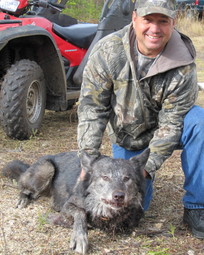 Alberta Canada Wolf Hunting